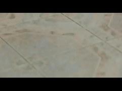 Bisex adult orgy on webcam